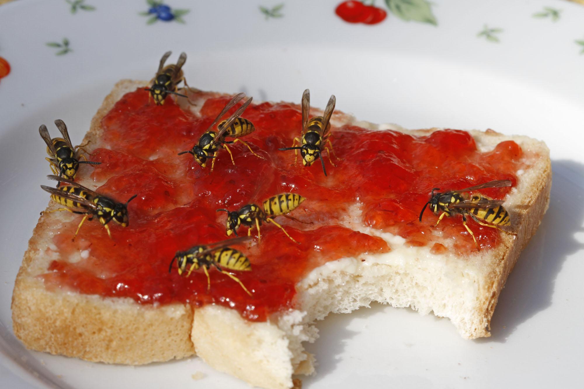 toast-mit-wespen
